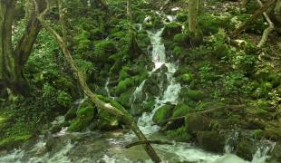 The Blederija River Source