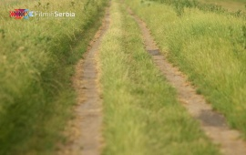 Carska bara – The Imperial Swamp