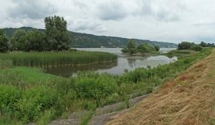 Danube near Zatonje village