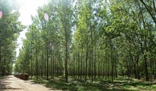 Forest in Kupinovo