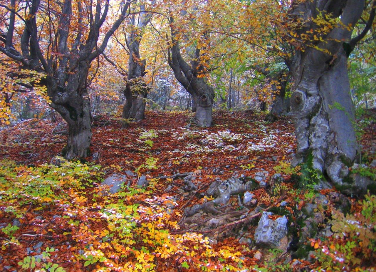 Autumn in Tara National Park