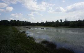 "Special Nature Reserve ""Koviljsko-petrovaradinski rit"""